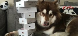 Chinese Billionaire's Son Purchases Eight iPhone 7 Smartphones for His Dog